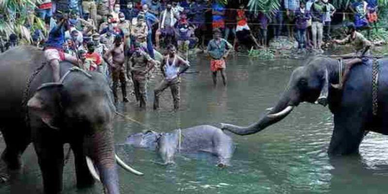 Killing pregnant elephant in Kerala